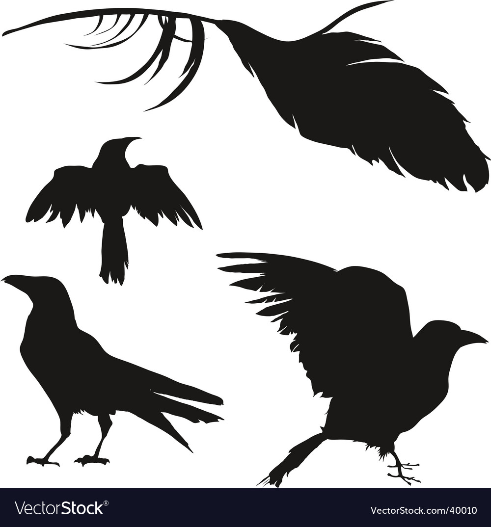 Crows and ravens vector image