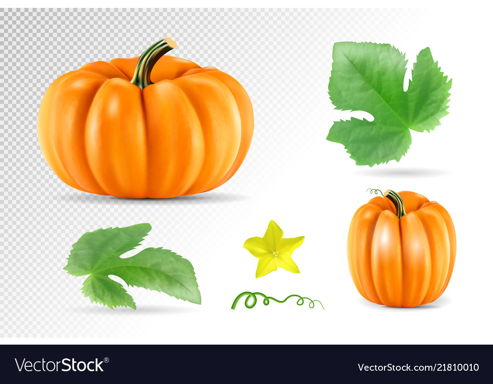 Set vegetable pumpkins with green leaves isolated