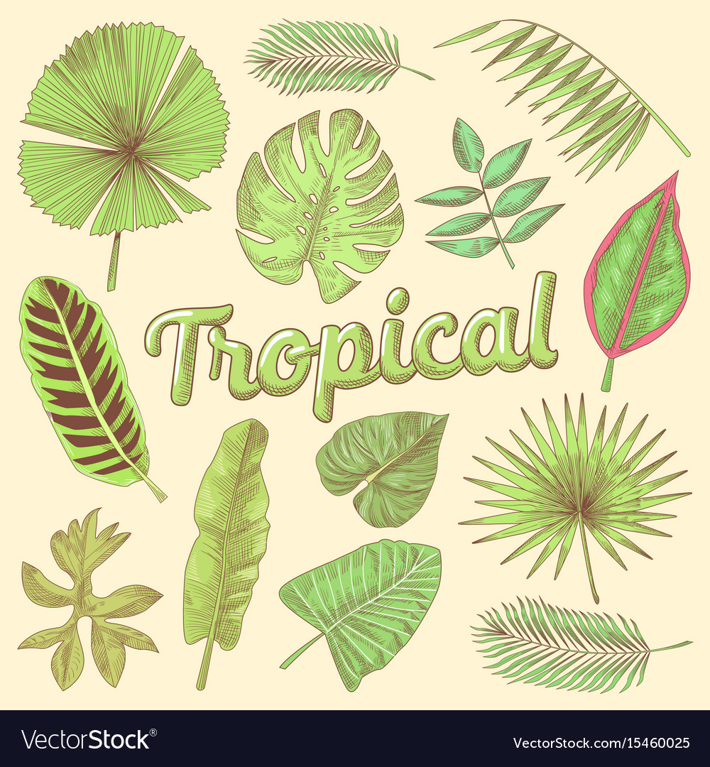 Tropical leaves hand drawn doodle with palms