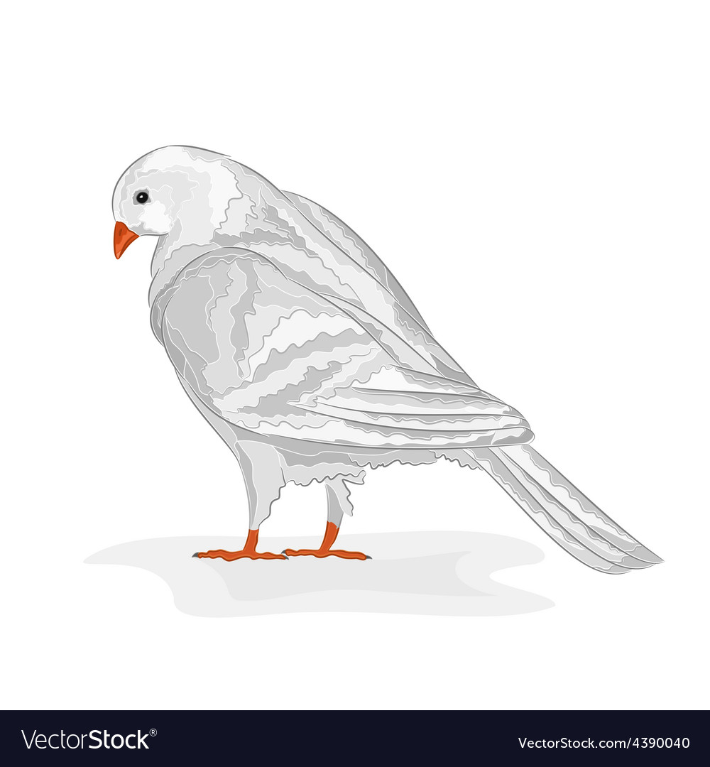 White Pigeon White Dove Symbol Peace Royalty Free Vector