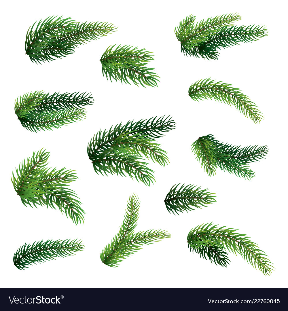Set fir branches isolated on white background