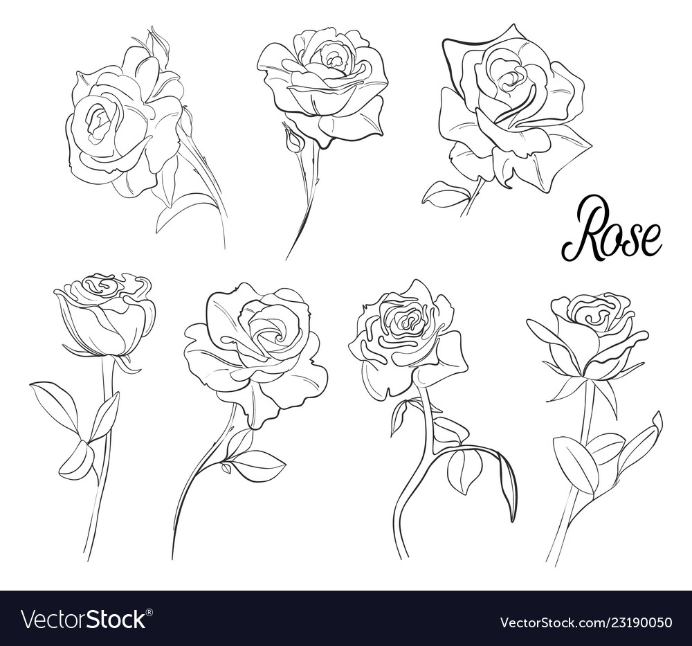 A set sketches roses a variety flowers