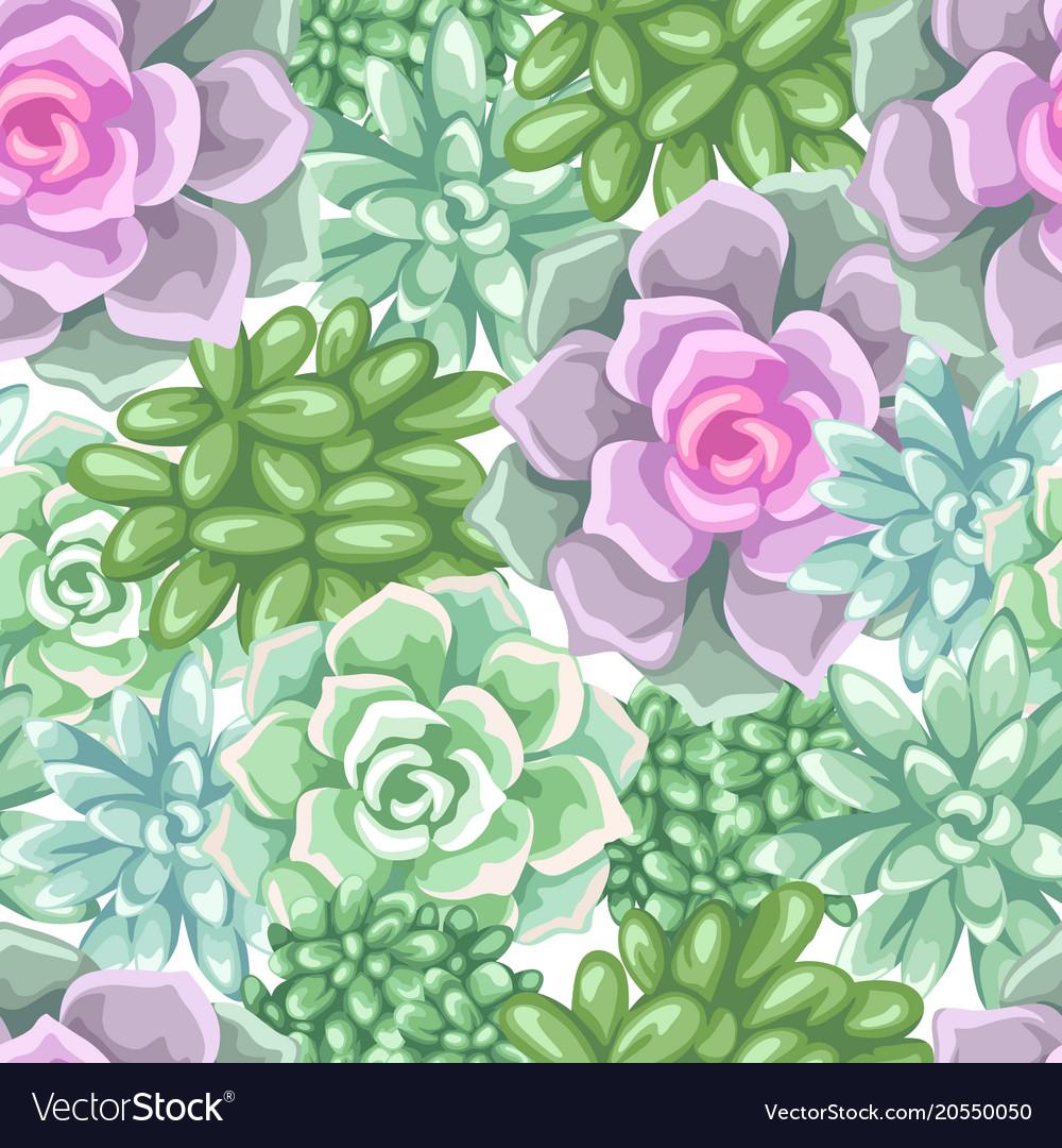 Seamless pattern with succulents echeveria jade