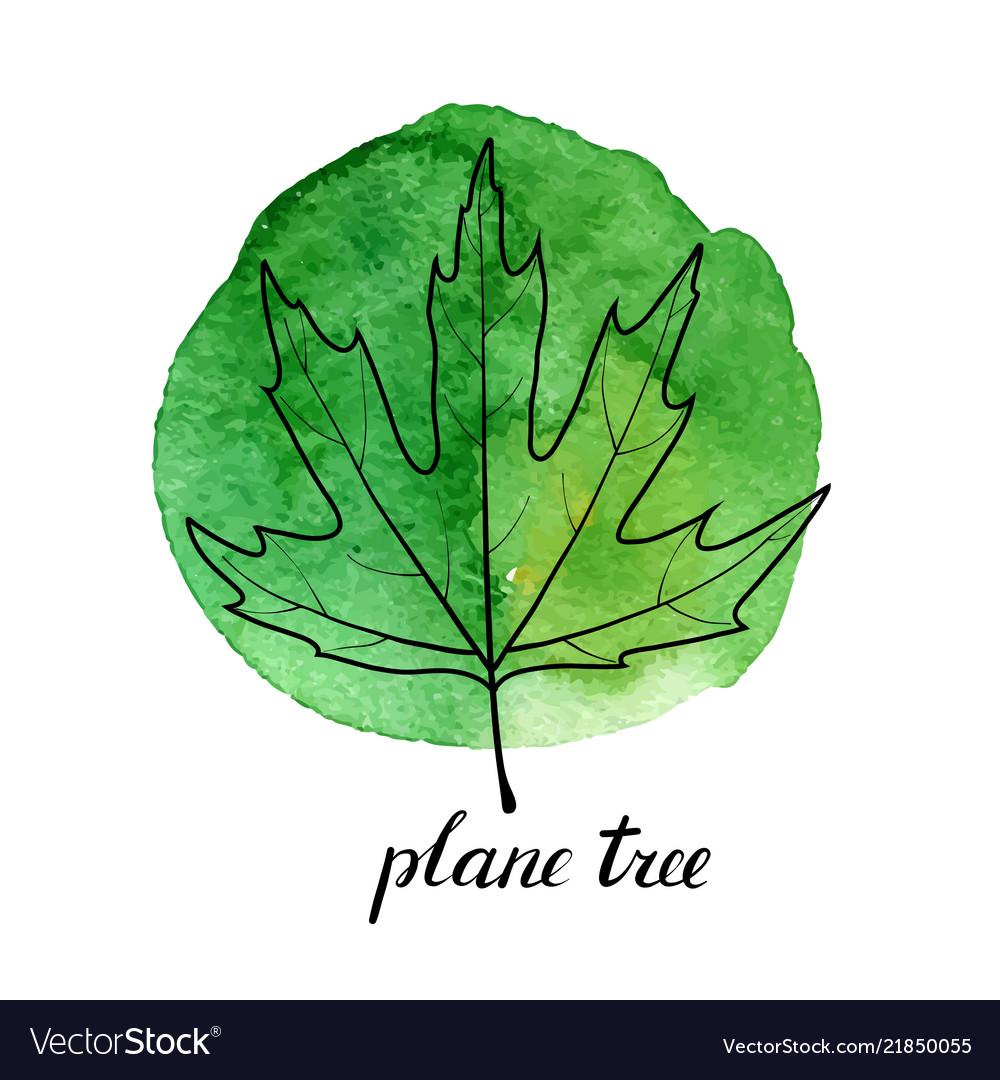 Leaf Plane Tree Royalty Free Vector Image Vectorstock