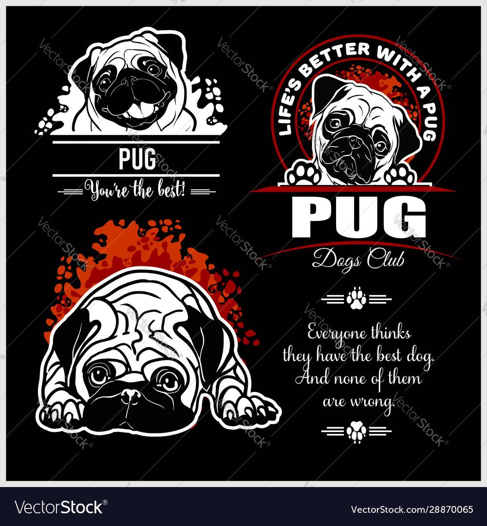 Pug - set for t-shirt logo and template