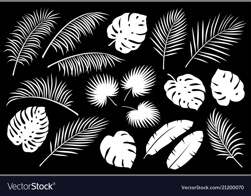 Set of white palm leaves