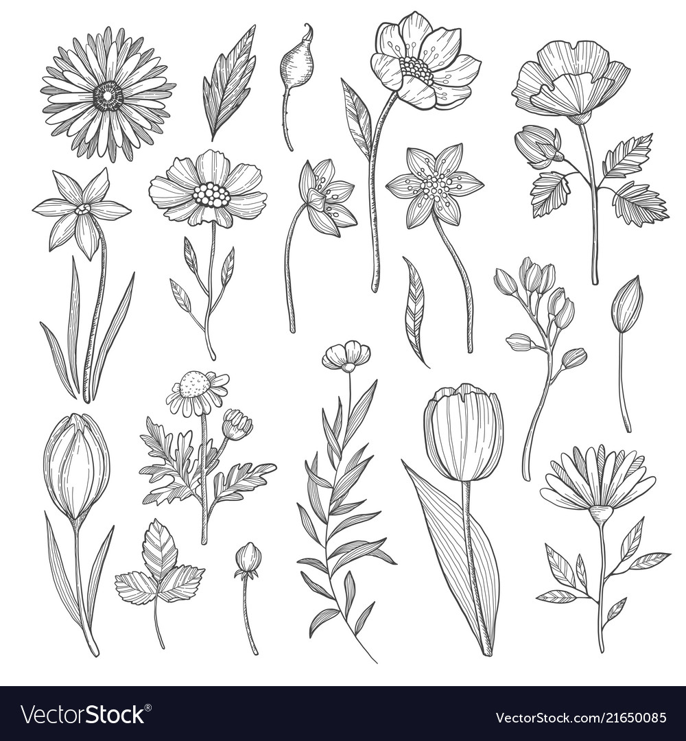 Hand drawn plants pictures isolate on