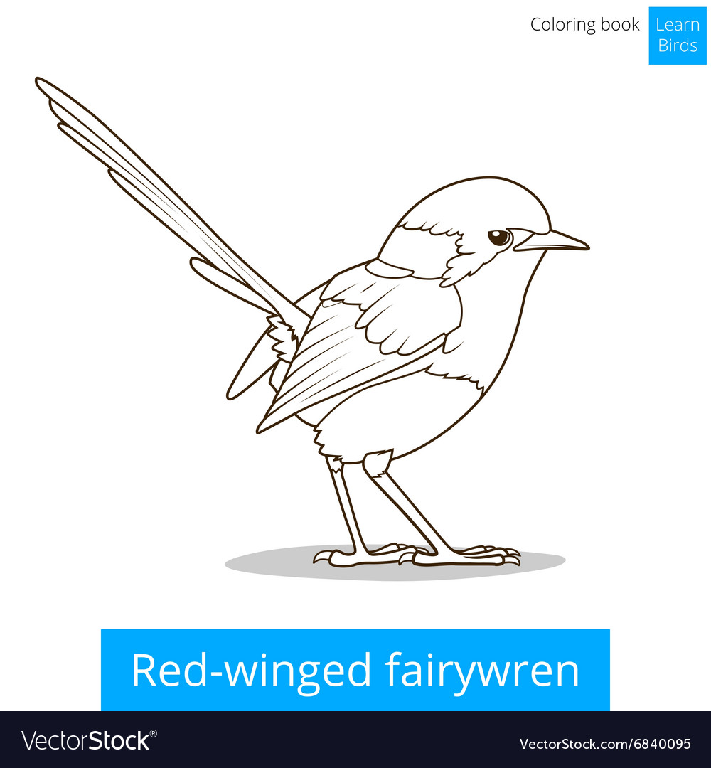 - Red Winged Fairywren Bird Coloring Book Royalty Free Vector