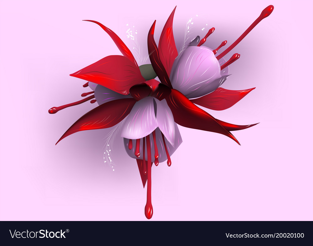 Colors, Flower & Fuchsia Vector Images (72)
