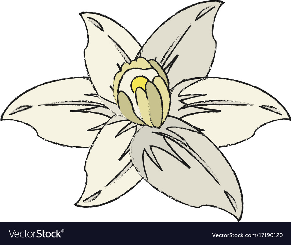 Beautiful flower symbol royalty free vector image beautiful flower symbol vector image izmirmasajfo