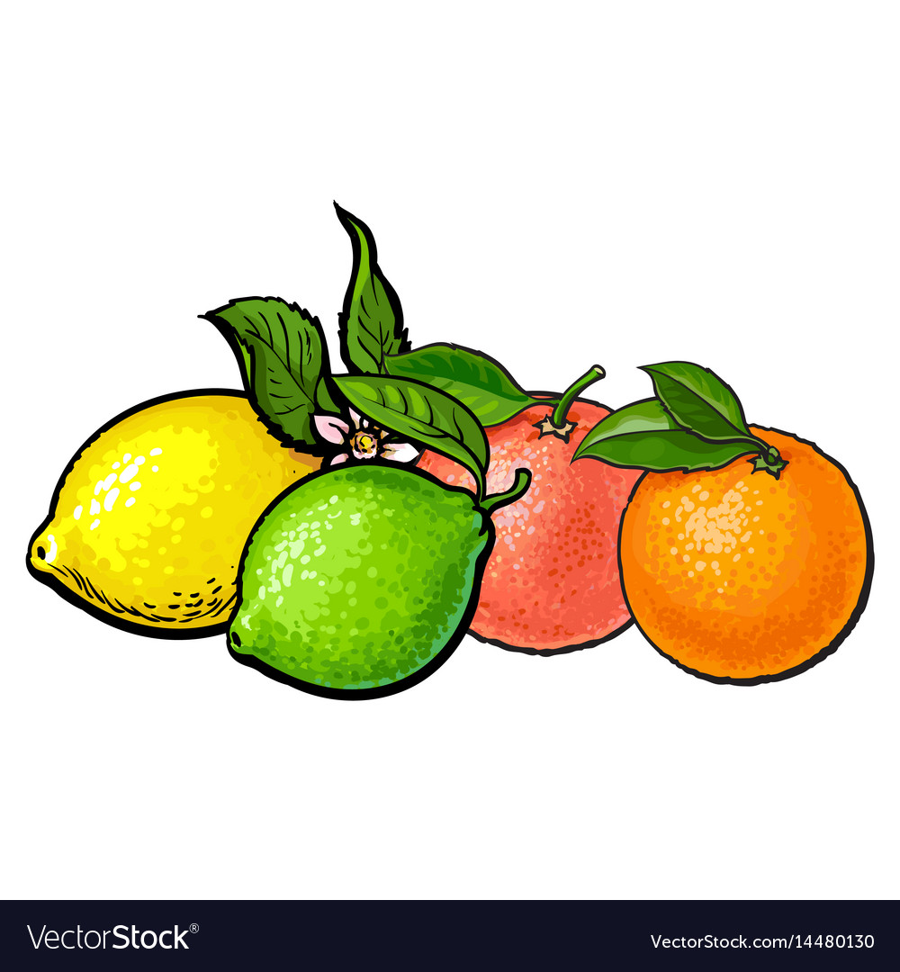Whole shiny orange grapefruit lime and lemon vector image