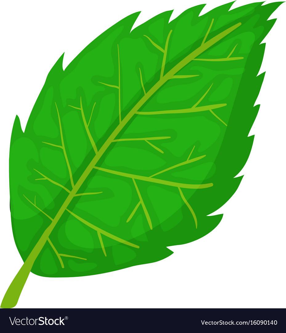 Birch Leaf Icon Cartoon Style Royalty Free Vector Image