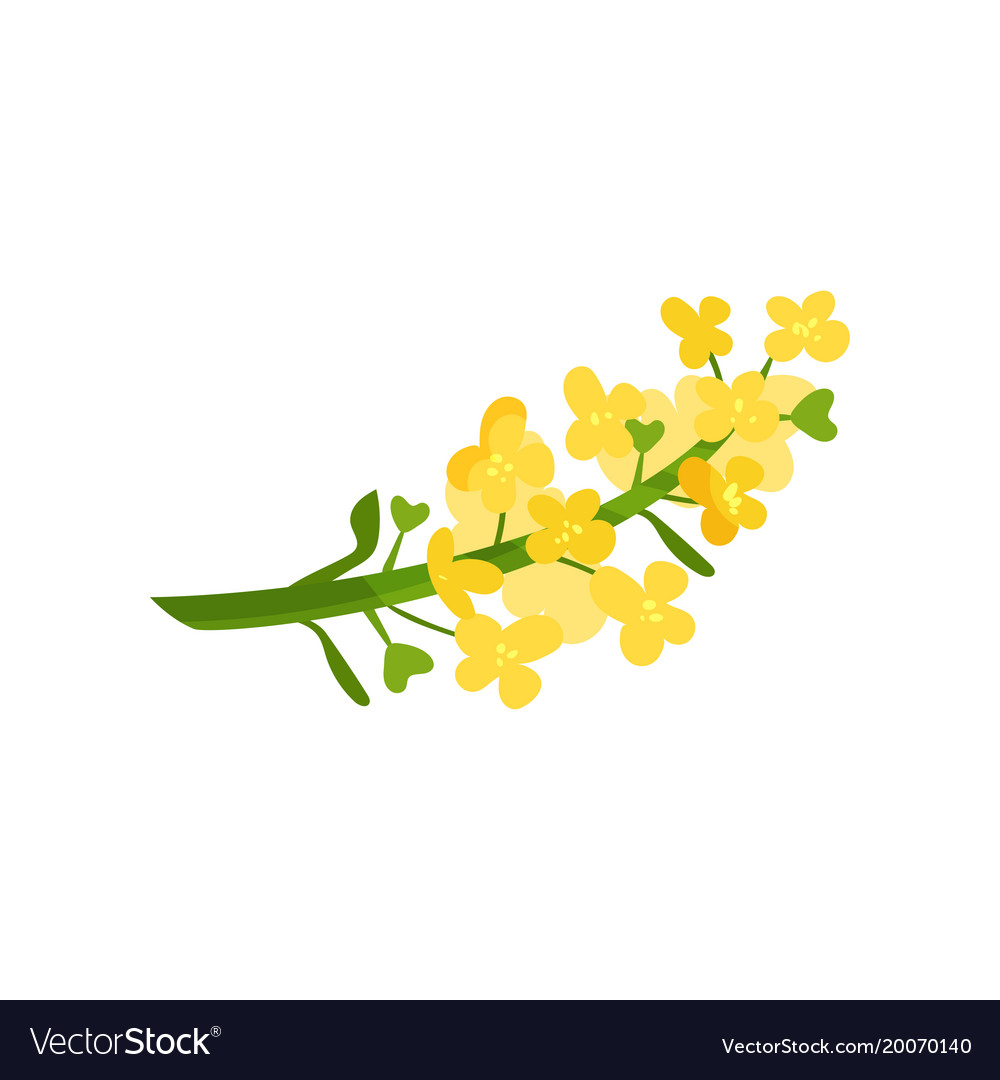 Cartoon of small yellow flowers on royalty free vector image cartoon of small yellow flowers on vector image mightylinksfo