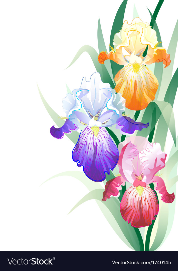 Holidays Card With Iris Flowers Bouquet Royalty Free Vector