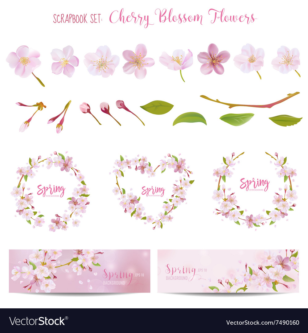 Cherry Blossom Spring Background