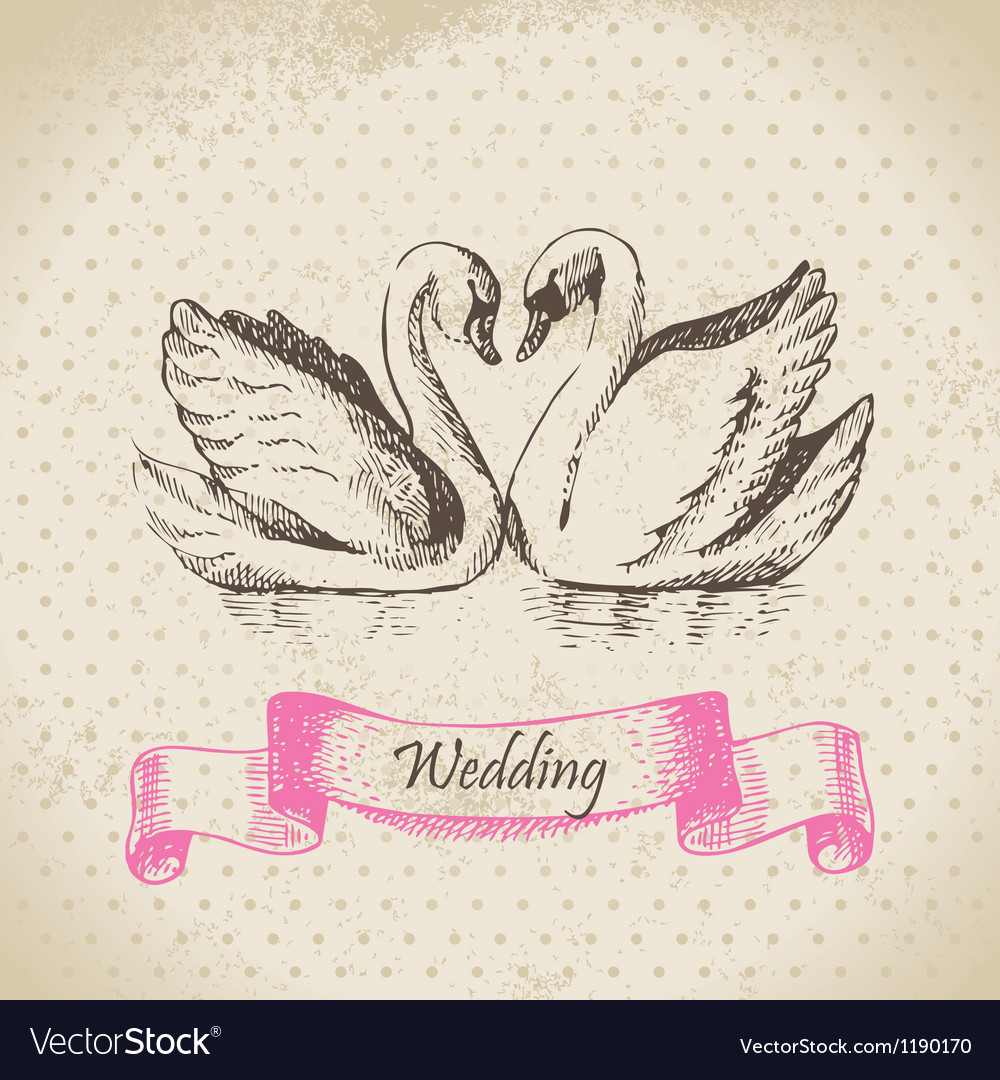Swans wedding hand drawn vector image