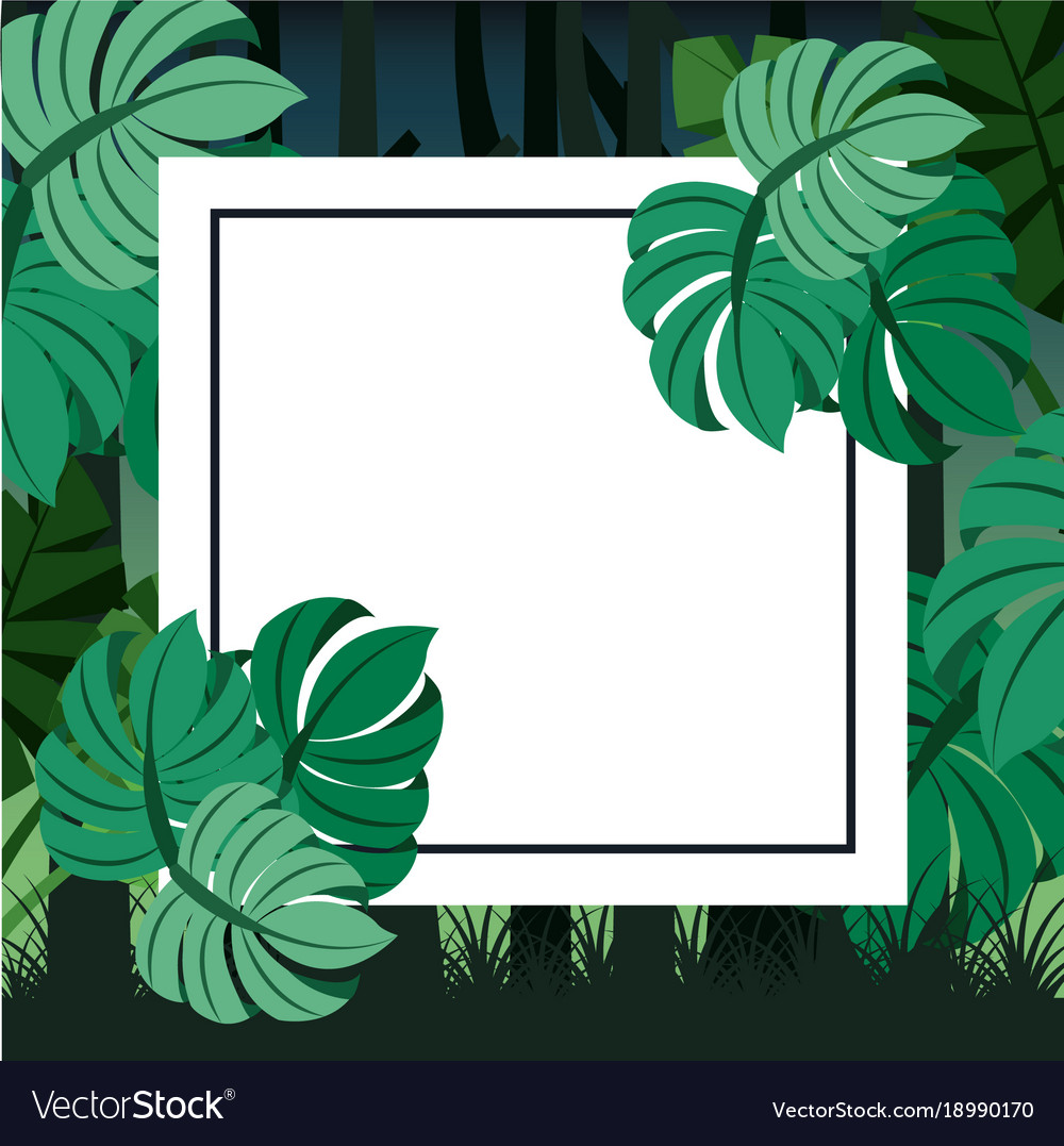 Tropical Landscape Leaves Palm Card For Text Blank Tropical leaves + foliage stock photo bundle. vectorstock