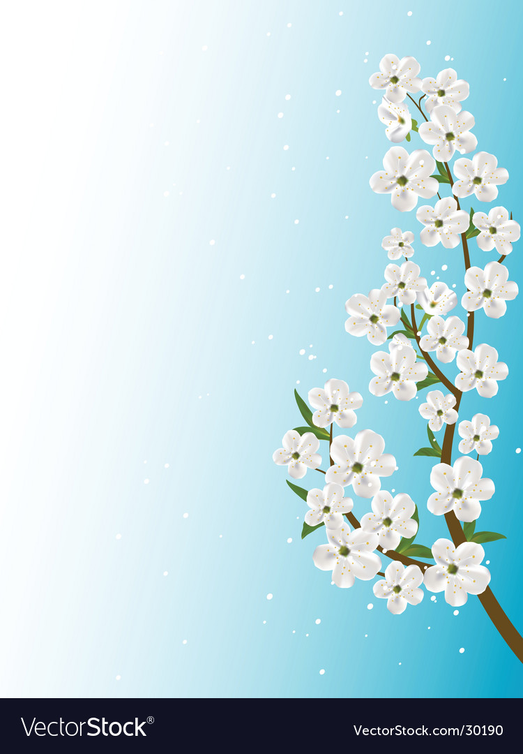 Download Flower Picture on Flowers On A Tree Branch Vector 30190   By Palll