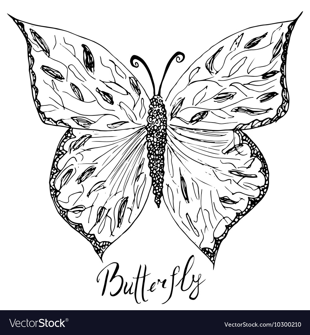 Ornamental hand drawn sketch of butterfly abstract vector image