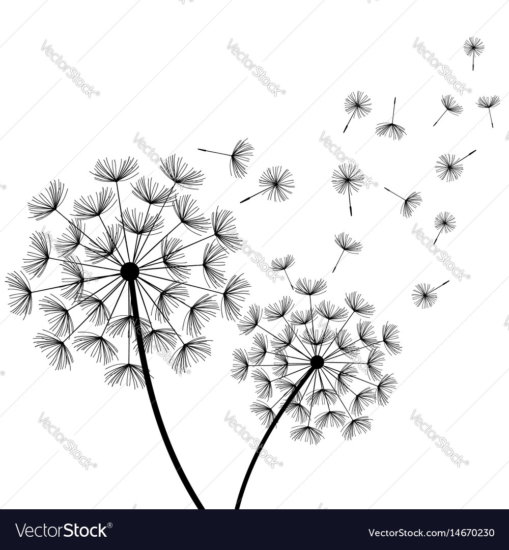 White background with two stylized black dandelion