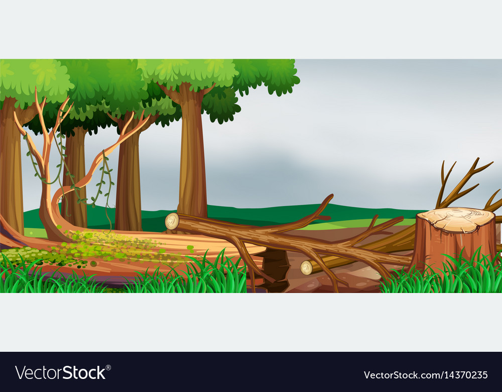 Scene with forest and chopped woods