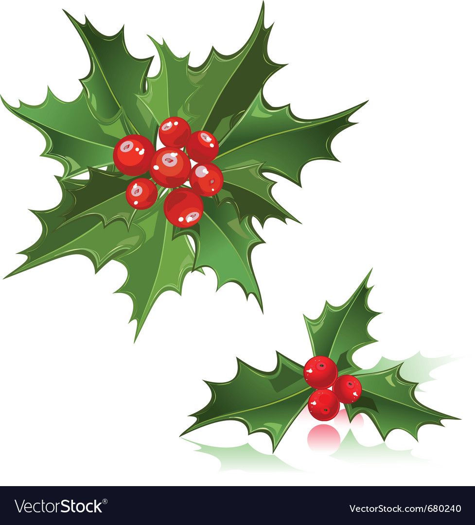 Christmas flower holly berry vector image