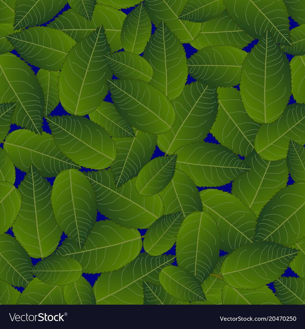 Camellia leaves on blue background
