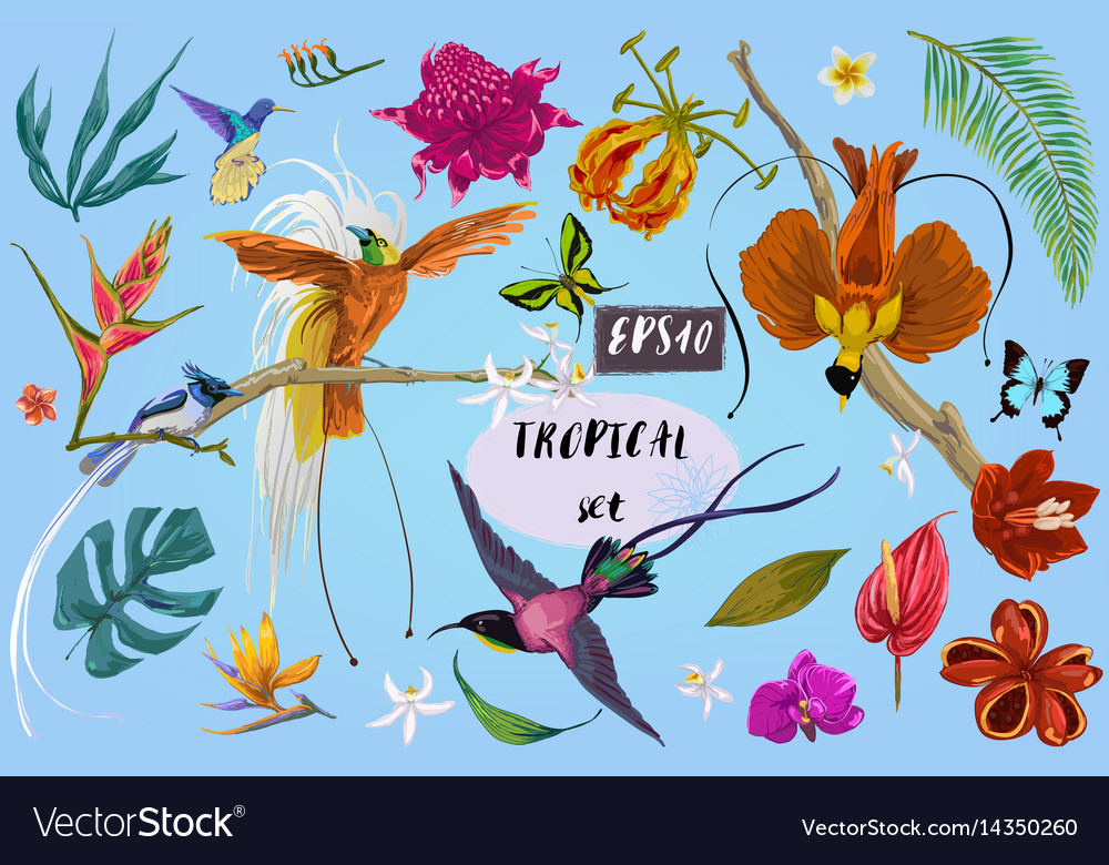 Bright tropical birds and flowers