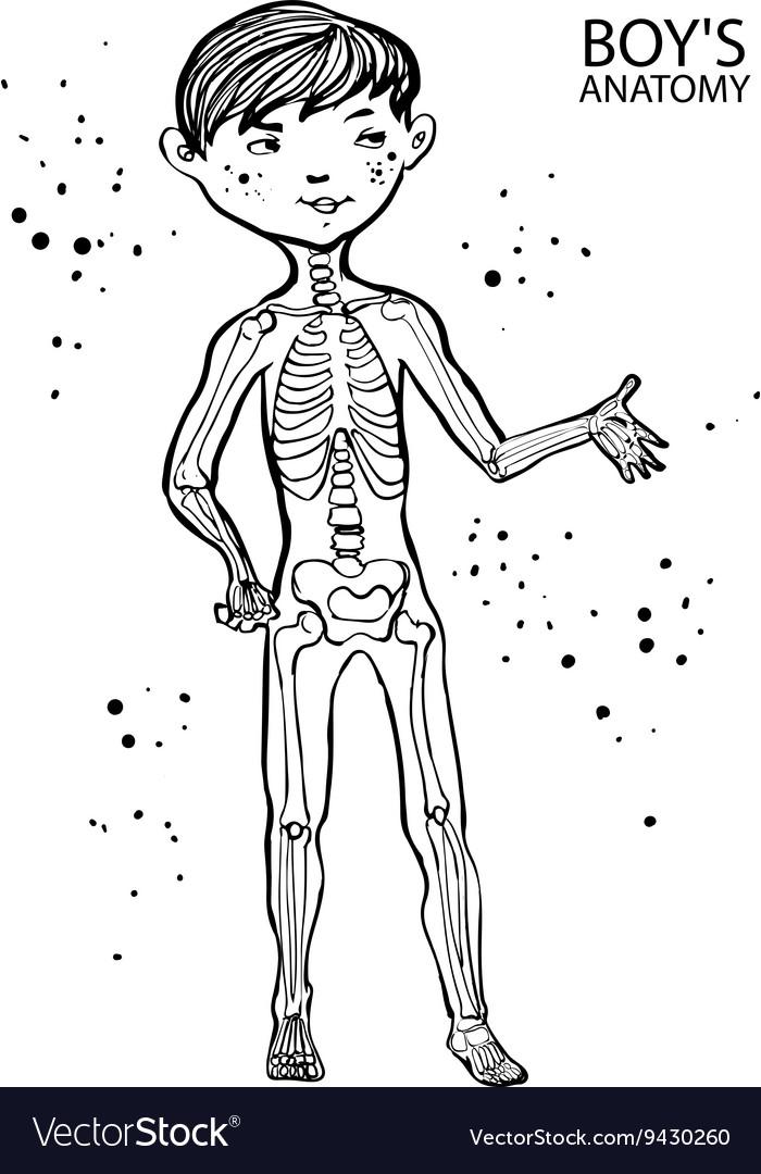 Cartoon Anatomy For Kidscute Boy And His Skeletal Vector Image