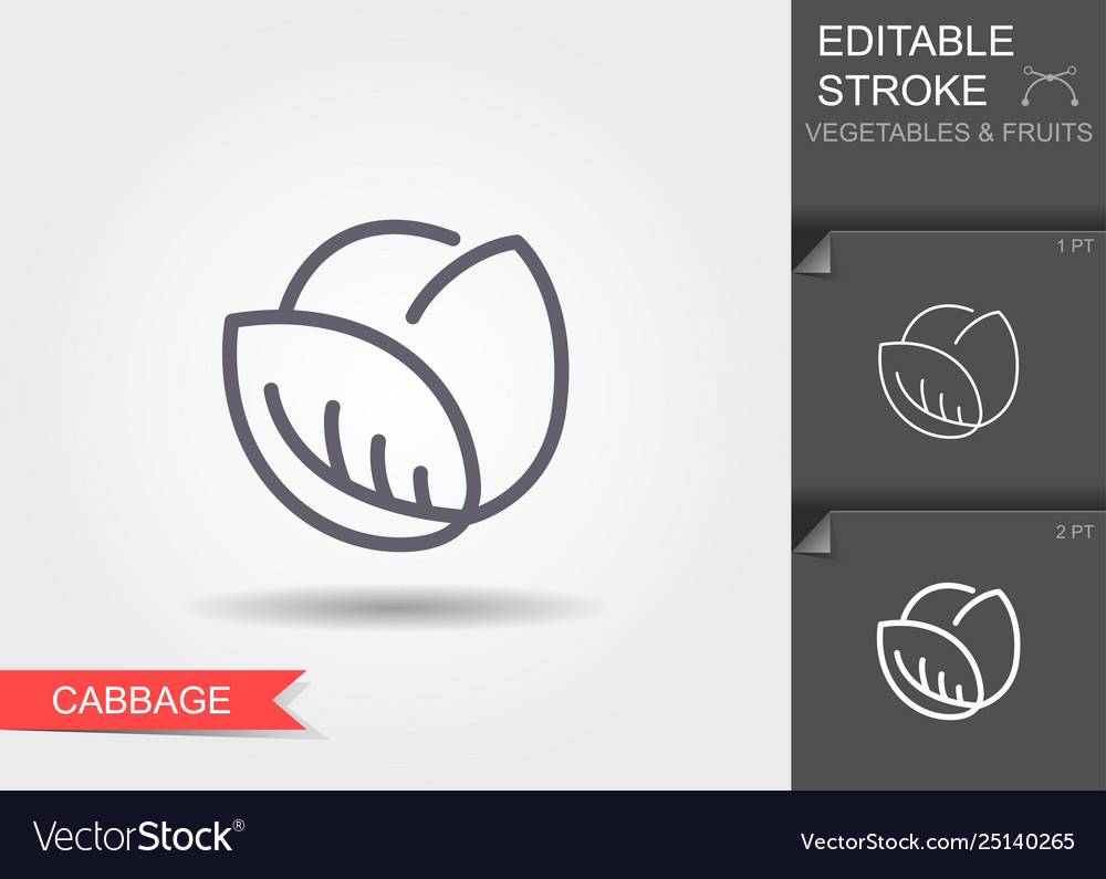 Cabbage line icon with editable stroke