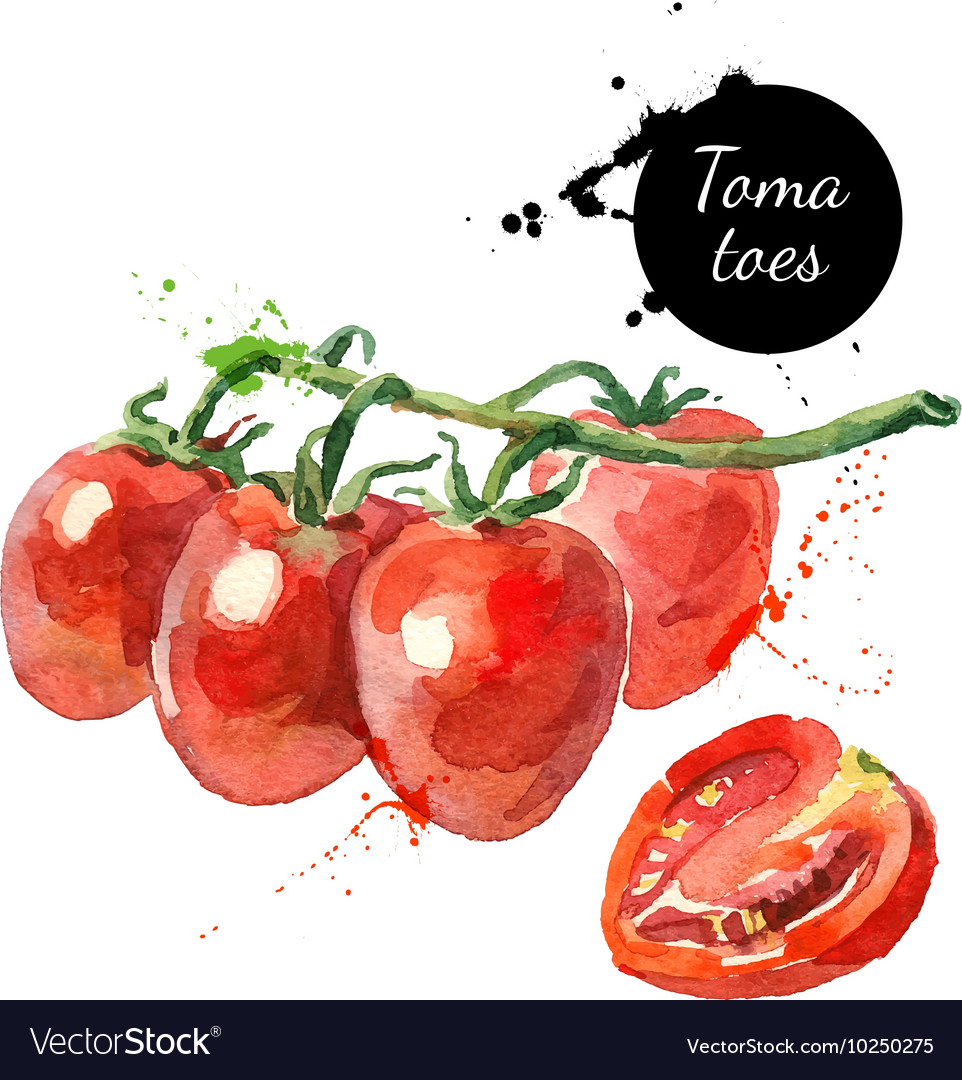 Watercolor datterino tomatoes Isolated eco food on vector image