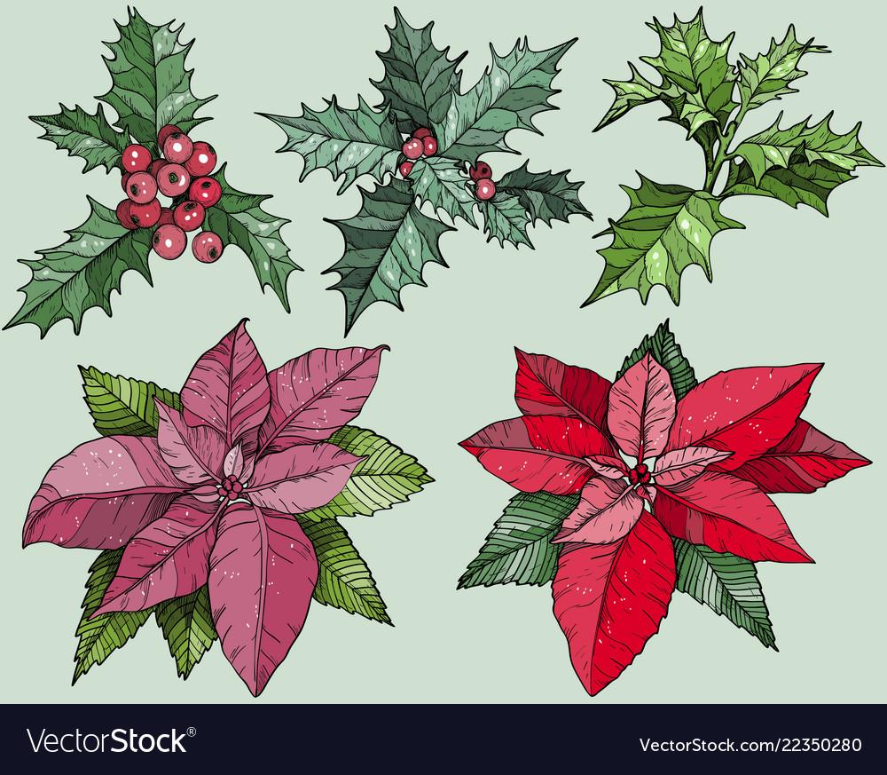 Colorful christmas flowers set