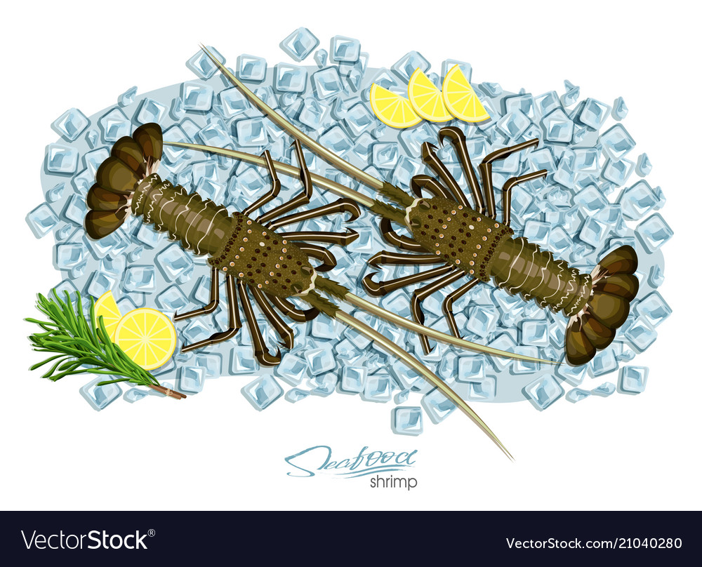 Spiny lobster on ice cubes in cartoon style fresh