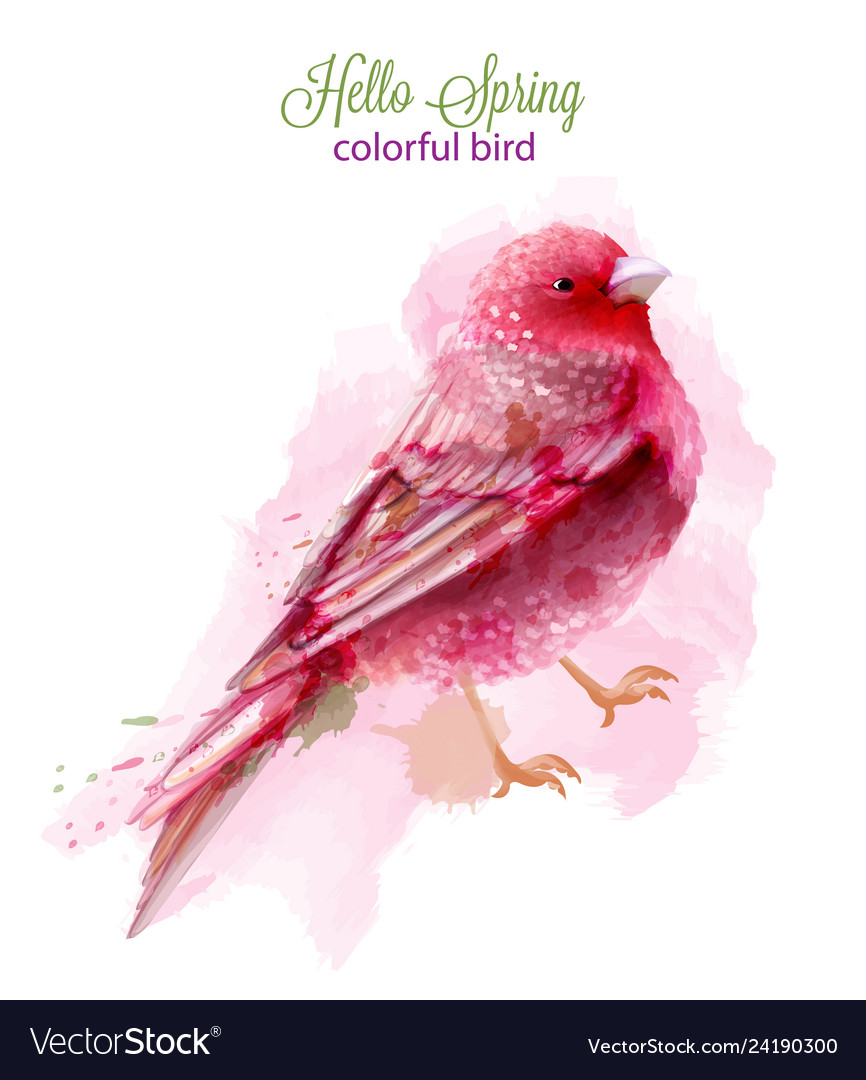 Cute pink bird watercolor isolated on white