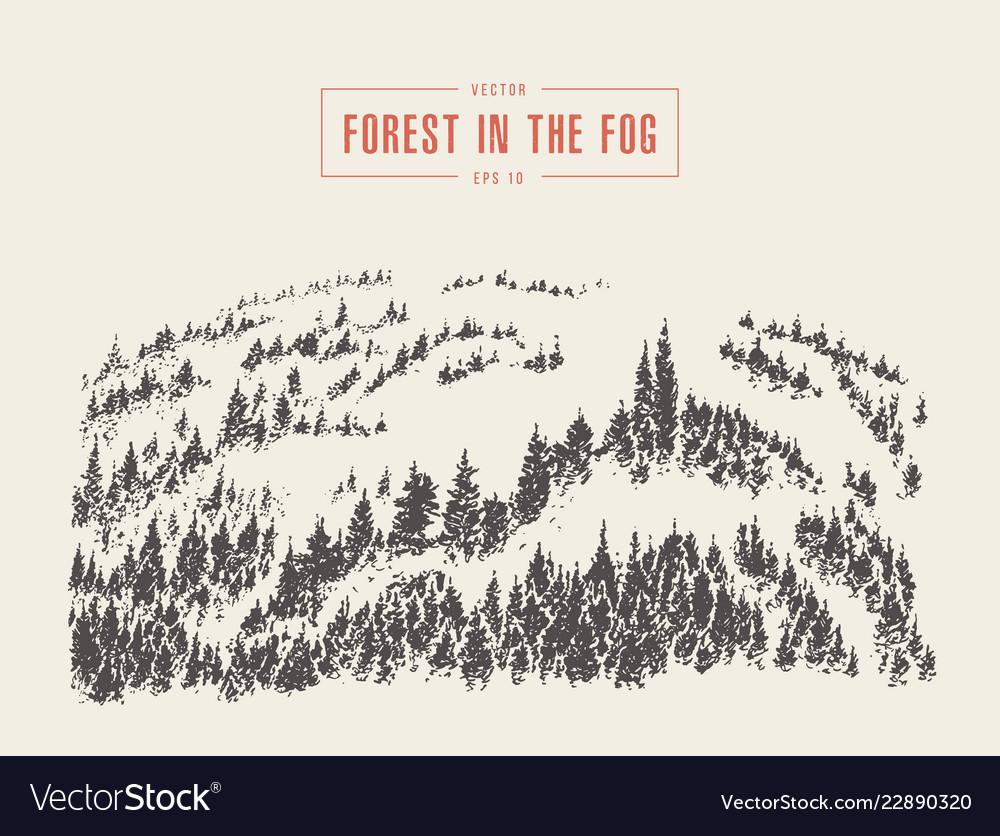Misty fog pine forest mountain drawn sketch