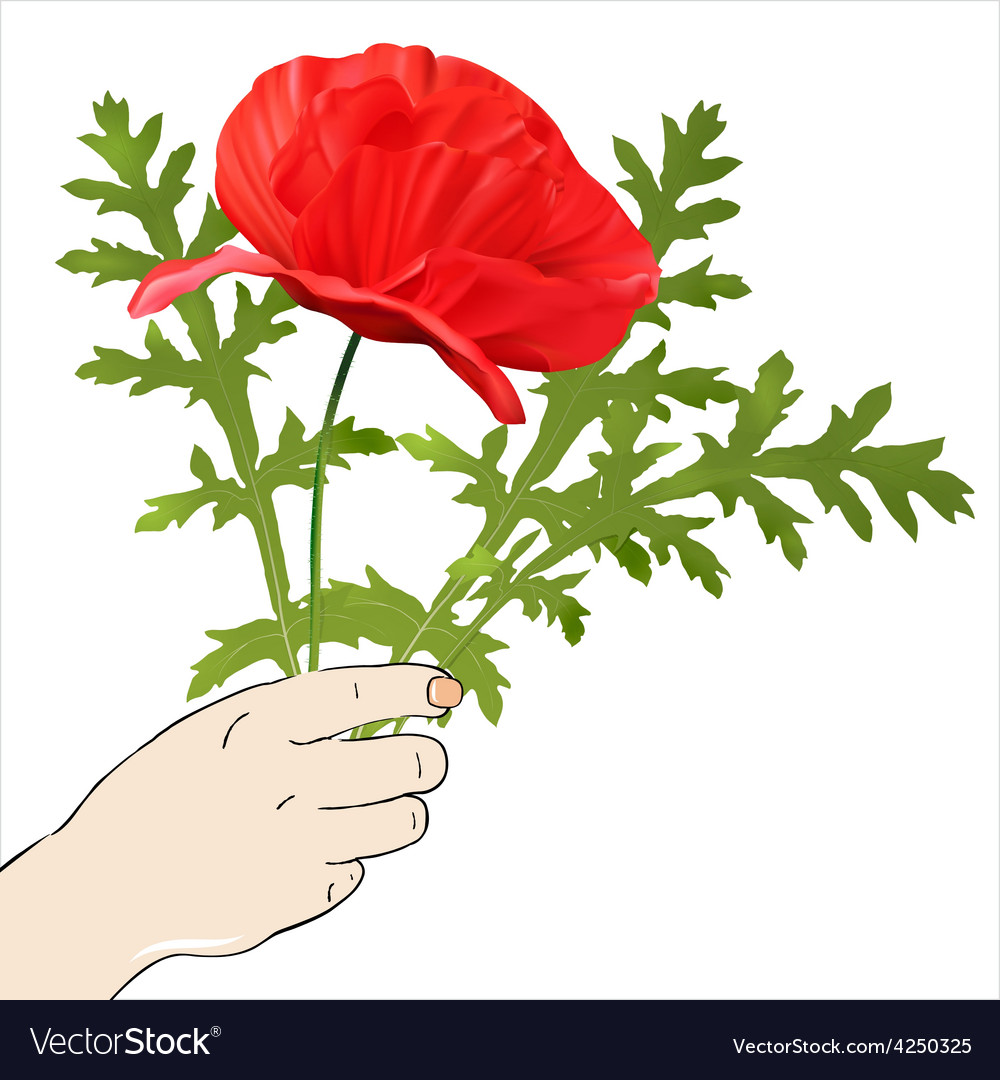 Hand with spring flowers vector image