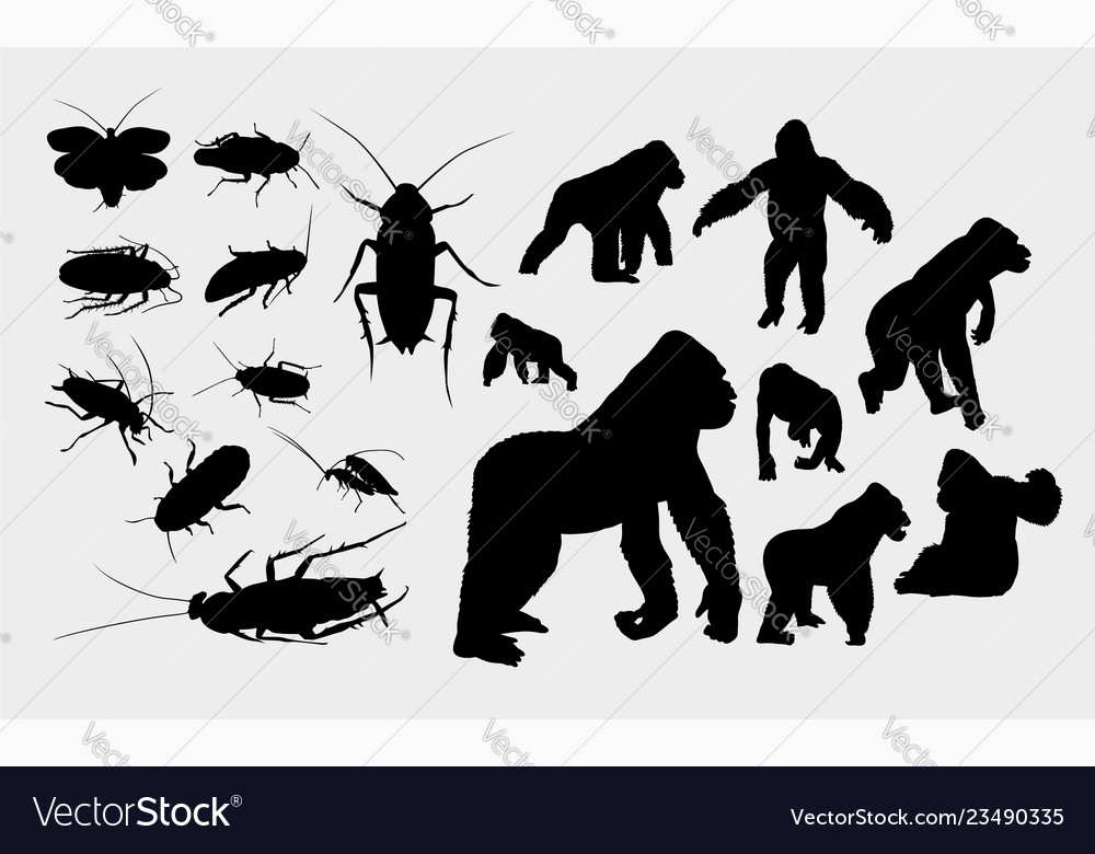 Gorilla and insect silhouette