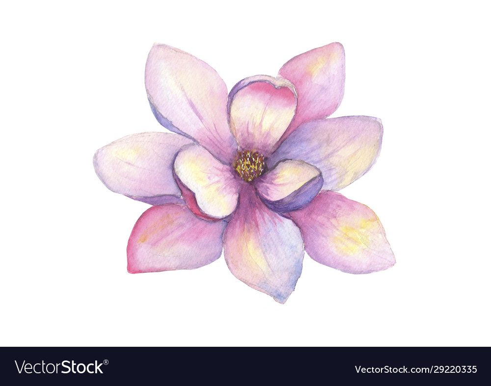Watercolor beautiful magnolia flower isolated on