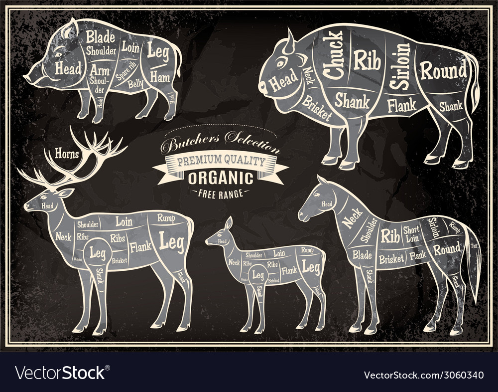 Magnificent Diagram Cut Carcasses Of Boar Bison Deer Horse Vector Image Wiring 101 Cajosaxxcnl