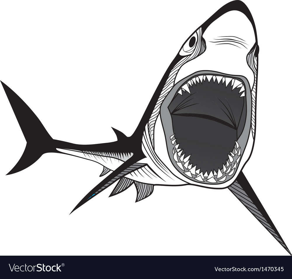 Shark fish head symbol for mascot