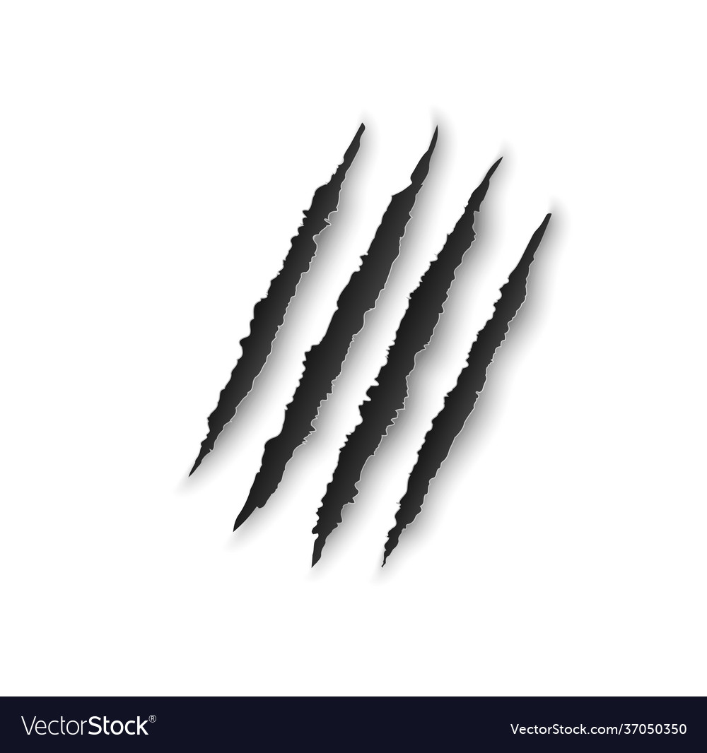 Bear Claw Rip Vector Images 81
