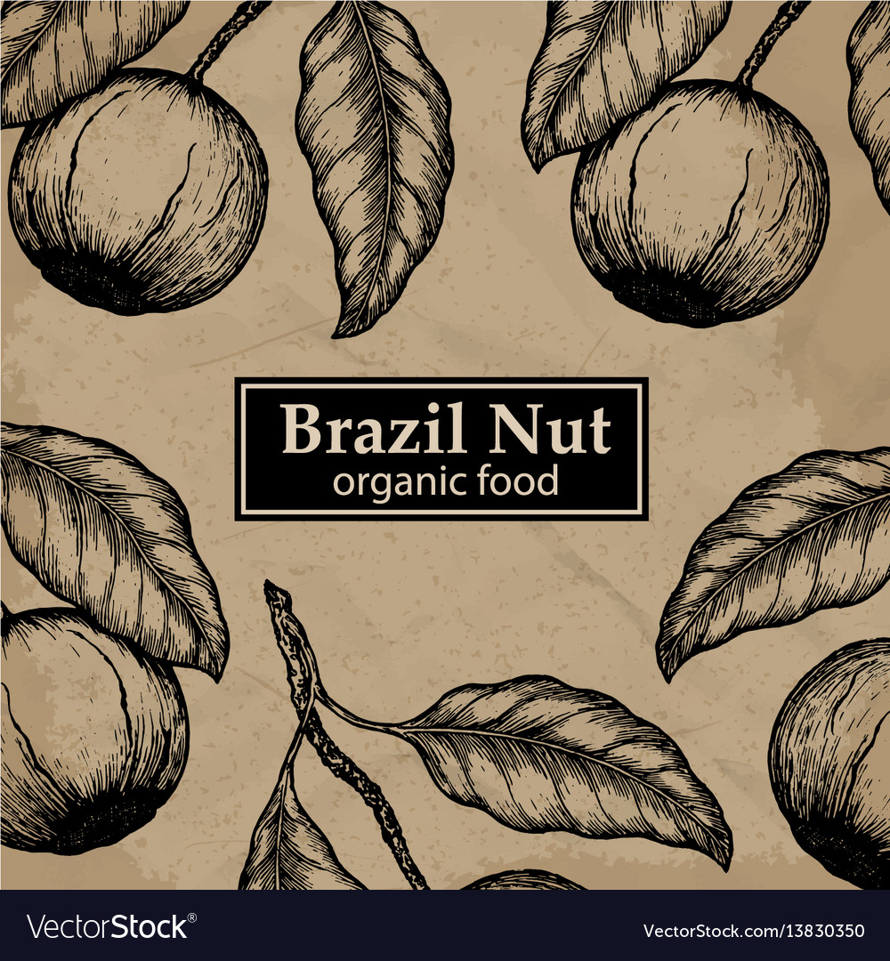 Brazil nuts tree design template vintage floral