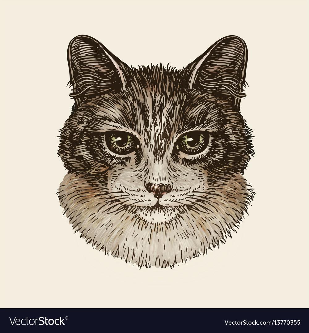Drawn portrait of cute kitten cat animal pet vector image