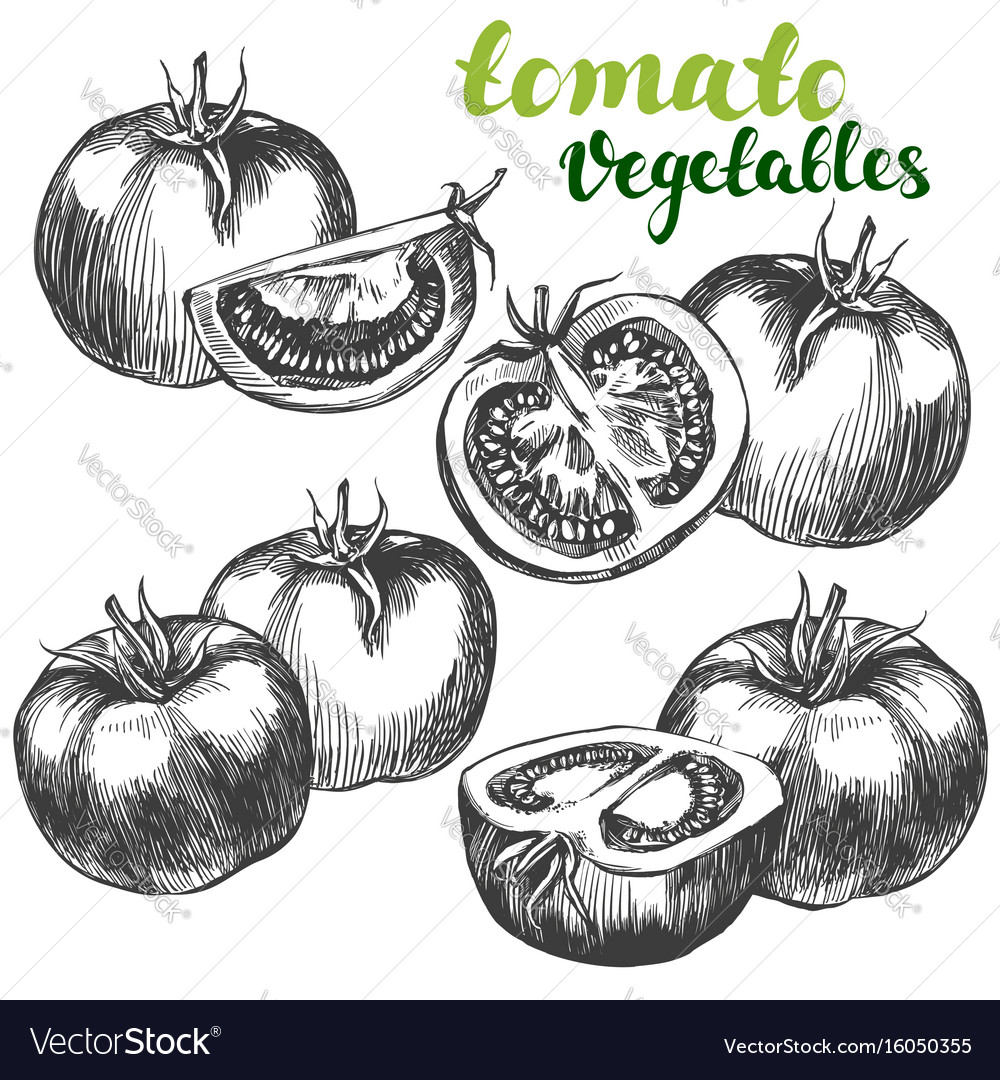 Tomato vegetable set hand drawn vector image