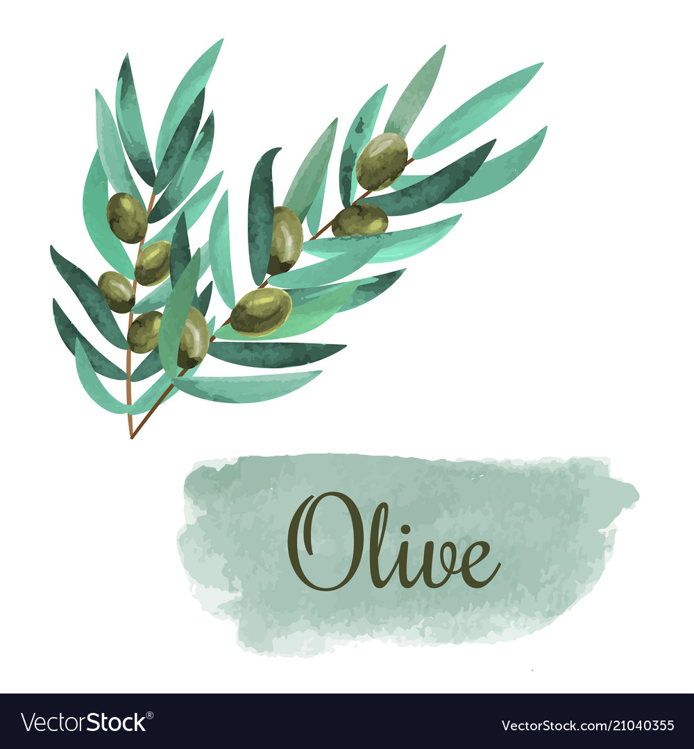 Watercolor olive branch card hand drawn vector image