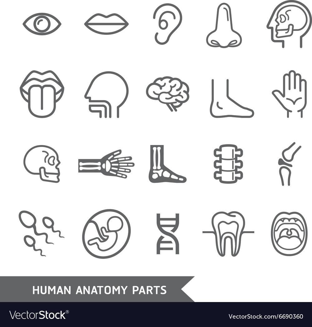 Human anatomy body parts detailed icons set