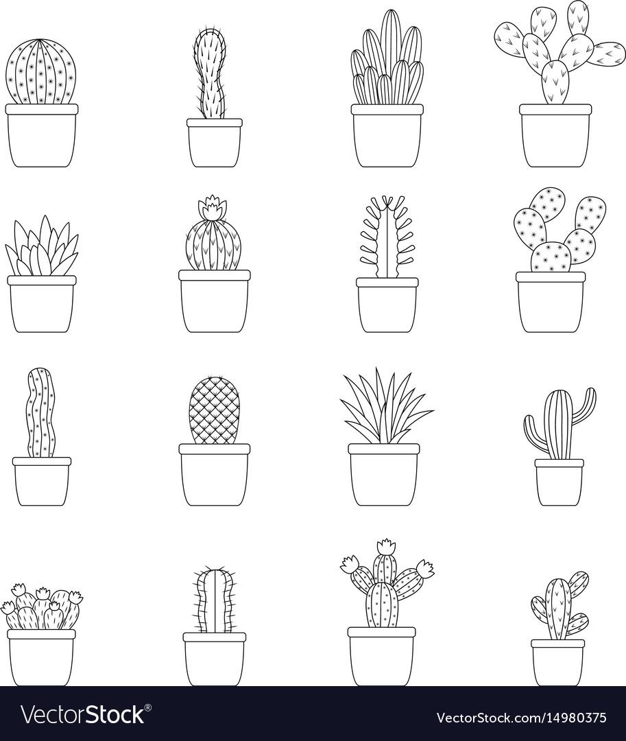 Set of cactus in pots