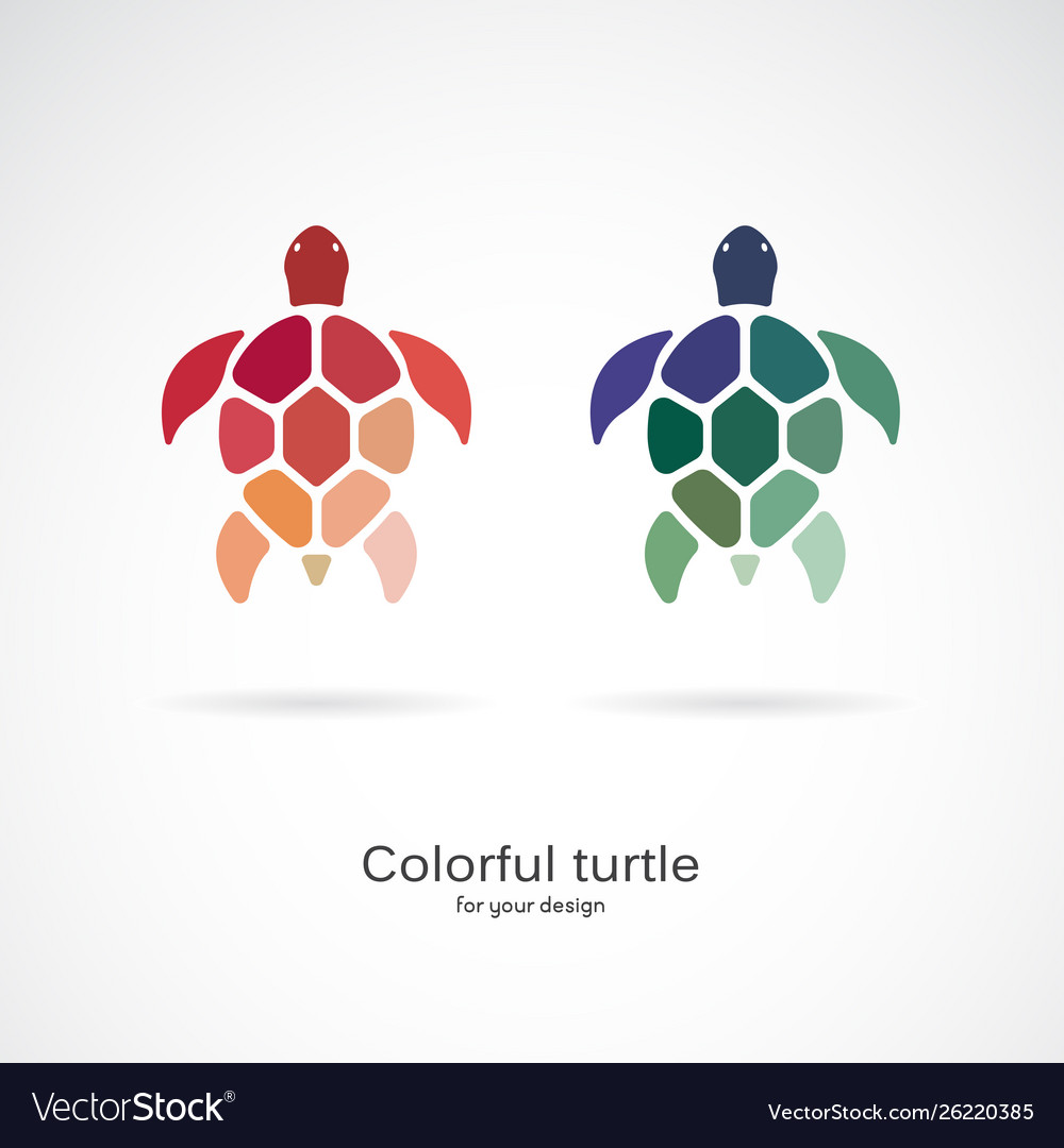 Two colorful turtles on white background wild