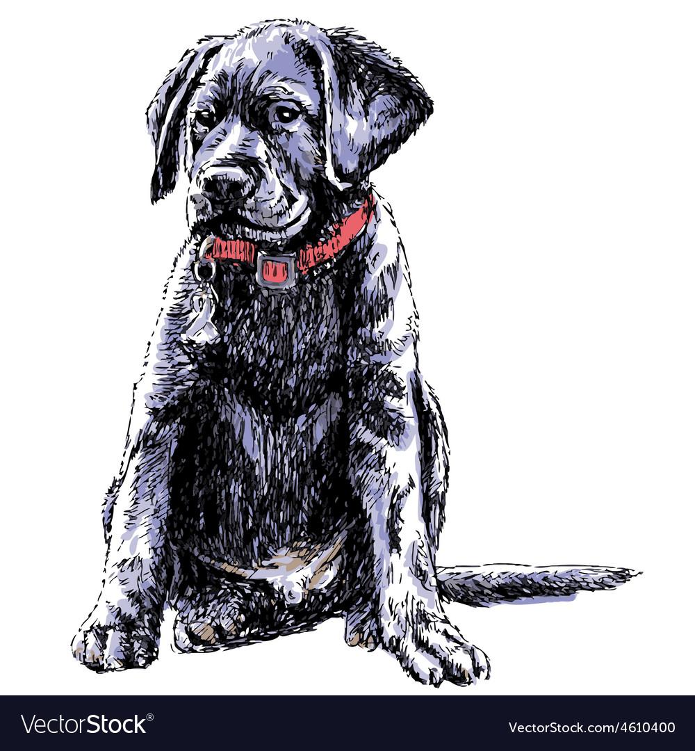 Labrador Retriever 02