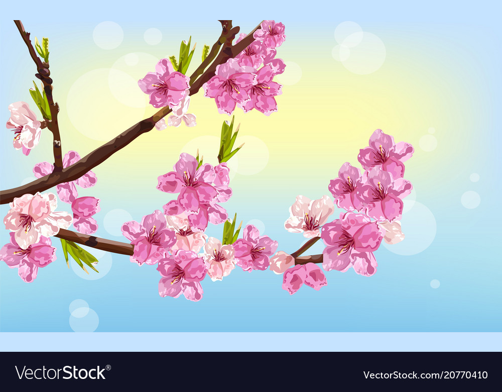 Cherry flowers spring card background